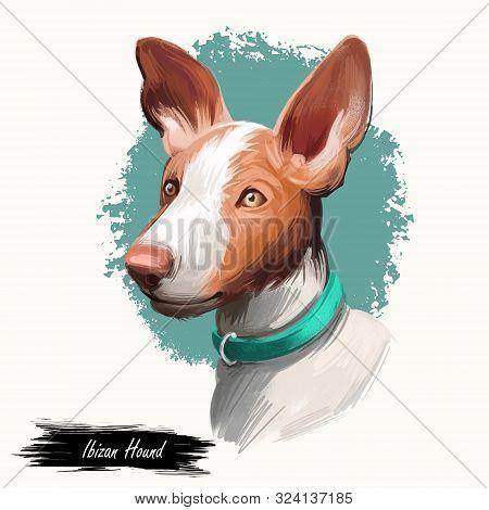 Ibizan Hound, Ibizan Warren Hound Dog Digital Art Illustration Isolated On White Background. Ibiza O
