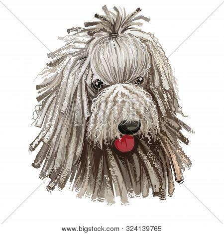 Komondor, Hungarian Komondor, Hungarian Sheepdog, Mop Dog Digital Art Illustration Isolated On White