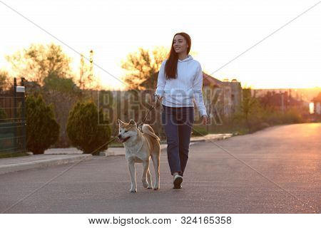 Young Woman Walking Her Adorable Akita Inu Dog Outdoors