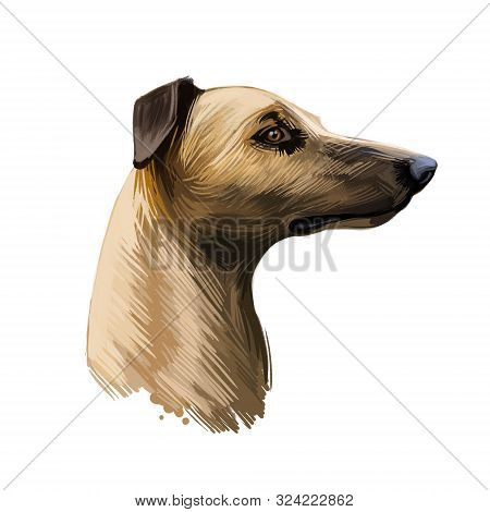 Magyar Agar Hungarian Breed Closeup Digital Art Illustration. Greyhound Originated In Hungary, Gazeh