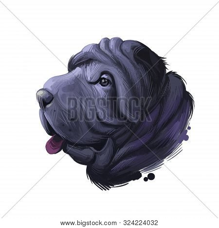 Miniature mini shar pei dog, profile portrait digital art illustration. Pet bred from recessive gene of shar-pei, Chinese originated puppy. Animal from China with wide padded muzzle, highly set ears. poster