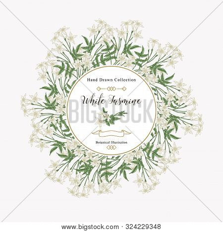 White Jasmine Background, Jasminum Officinale Flowers And Leaves. Medical Plants Hand Drawn. Vector