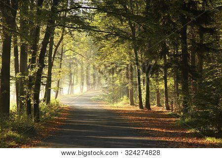 Road autumn forest at sunrise Nature landscape Nature background Sun rays in Path Natural environment Leaves foliage yellow Nature background Travel Nature Road mist fog Nature background Fall woods outdoors Road in sunshine Nature background Autumn trees