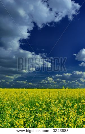 Vivid Summer Landscape