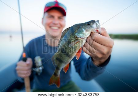 Happy amateur angler holds perch fish (Perca fluviatilis) in one hand and fishing rod in the other. Fisherman shows the fish and smiles being on the lake. Image with shallow DOF and focus on the fish