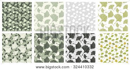Japanese Patterns Collection With Gingko Biloba Plant Leaves. Vector Botanical, Healthy Textures Pac