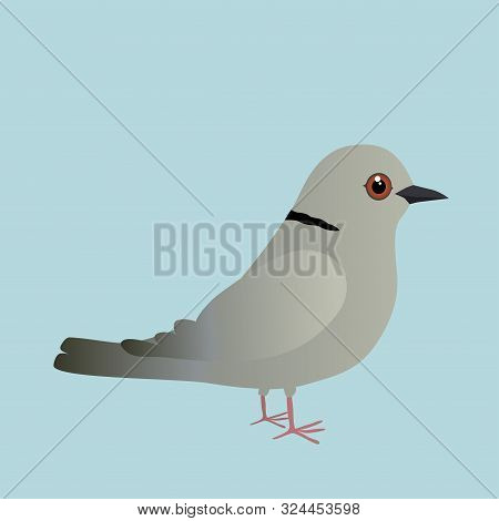 Eurasian Collared Dove Illustration On A Blue Background