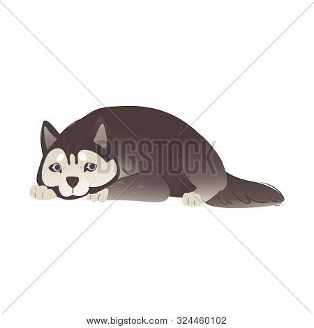 Alaskan Malamute Or Siberian Husky Dog Laying Flat Vector Illustration Isolated.