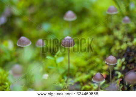 Small Toadstool Mushrooms, Macro, Toadstool Mushrooms, Horizontal Photo