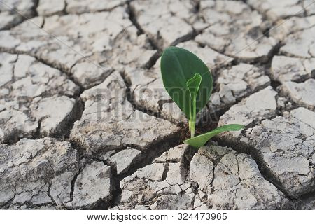 Tree Growing On Cracked Ground. Crack Dried Soil In Drought, Affected Of Global Warming Made Climate