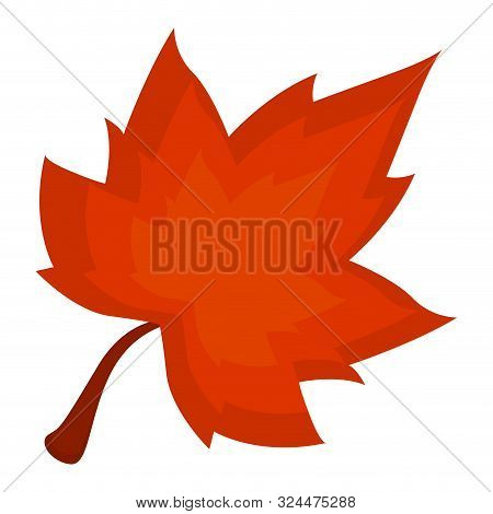 Isolated Autum Leaf On Aw Hite Background - Vector