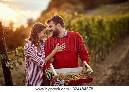 Grape harvesting- Smiling Couple winemakers in the vineyard during sunrise. Autumn vineyards.