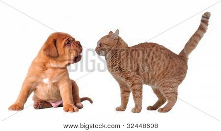 Emotional cat and puppy isolated on white