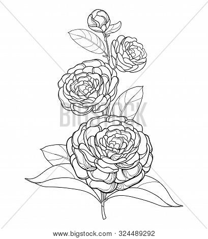 Vector Branch With Outline Camellia Flower, Bud And Leaf In Black Isolated On White Background. Orna