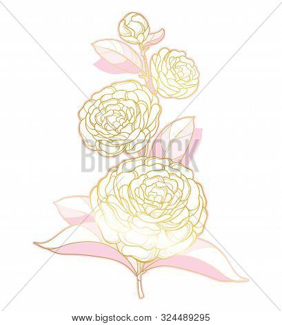 Vector Branch With Outline Camellia Flower, Bud And Leaf In Pastel Pink And Gold Isolated On White B