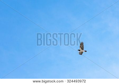 Bird In Flight Close-up. Bottom View. Flies Against The Background Of A Beautiful Blue Sky With Feat