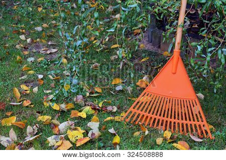 Leafy Lawn, Rake Leaning Against The Tree. Autumn Cleaning Works.