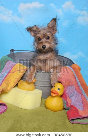 A little yorkshire terrier puppy sits in a bath tub with yellow rubber ducks, towel, and sponge against a blue sky poster
