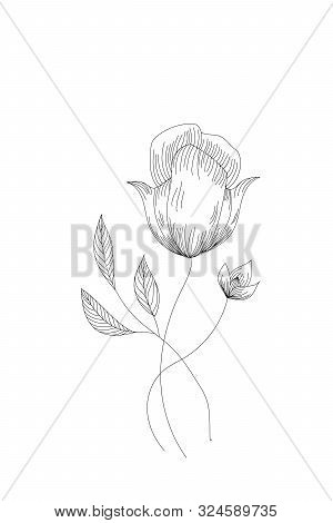 Flowers, Tulip Line Expand Icon On White Background