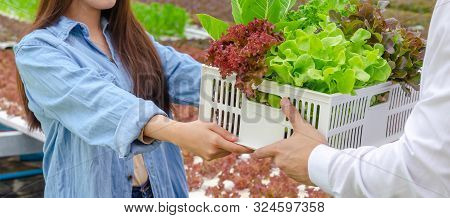Web Banner. Young Friendly Woman Farmer Giving Box And Selling Organic Hydroponic Fresh Vegetable Pr