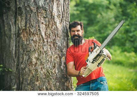Harvest Of Timber. Lumberjack With Chainsaw In His Hands. The Lumberjack Working In A Forest. Defore