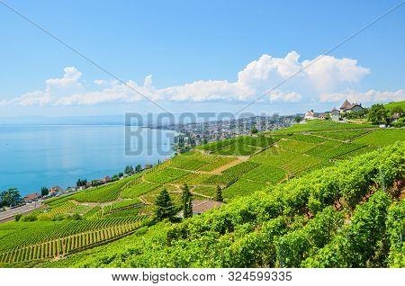 Stunning Landscape In Lavaux Wine Region, Switzerland. The Wine-growing Area Located By Lake Geneva.
