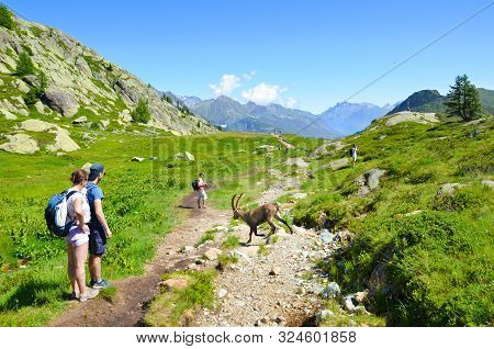 Chamonix-mont-blanc, France - July 30, 2019: People Watching Alpine Ibex In The French Alps. Wild Go