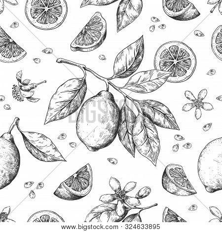Hand Drawn Lemon Pattern. Vintage Seamless Texture For Juice Label, Citrus Ink Sketch. Vector Illust