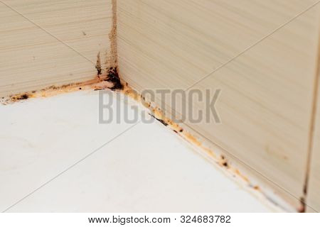Mold Fungus And Rust Growing In Tile Joints In Damp Poorly Ventilated Bathroom With High Humidity, W