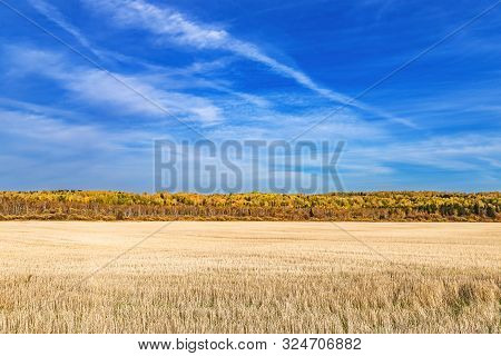 Mowed Field With A Strip Of Forest On A Warm Autumn Day