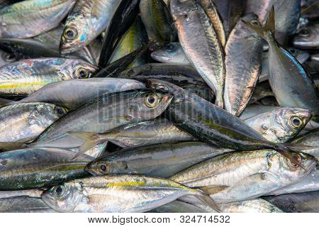 Fresh Saltwater Fish Pile Top View Photo. Seafood Local Market Store. Fresh Fishing Catch With Macke