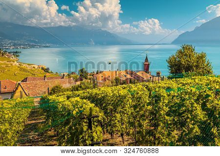 Stunning Terraced Vineyard With Lake Geneva In Background. Wonderful Place With Vineyards And Vine R