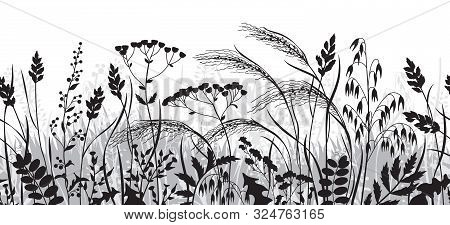Seamless Horizontal Border Made With Monochrome Wild Plants. Black And Grey Silhouette Meadow Grass