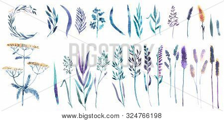 Watercolor Set With Floral Elements And Leaves, Wild Grass, Flowers, Weeds, Spikelets, Tansy.