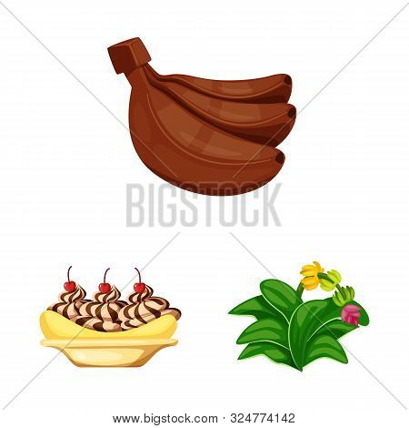 Isolated Object Of Tropical And Ripe Icon. Set Of Tropical And Potassium Stock Vector Illustration.