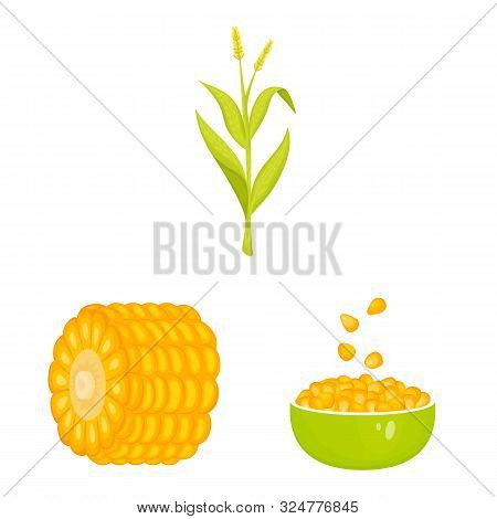 Vector Illustration Of Maize And Food Symbol. Set Of Maize And Crop Stock Vector Illustration.