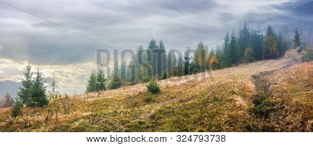 Overcast Misty Weather In Autumn At Sunrise.  Forest In Haze On The Meadow With Weathered Grass.