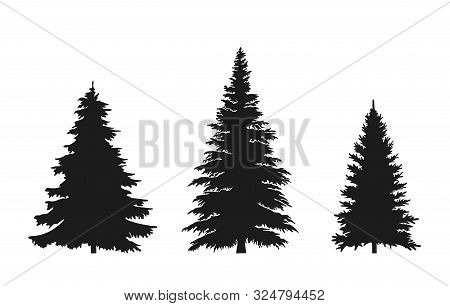 Set Of Fir Tree Silhouette. Christmas And New Year Design Elements. Christmas Trees Isolated Vector