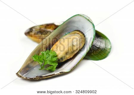Mussels Isolated On White Background / Green Mussel Shell With Parsley