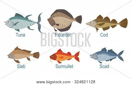 Collection Of Fish Species With Name Subscription, Tuna, Cod, Flounder, Slab, Surmullet, Scad Vector