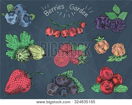 Berries Garden, Blackberries, Boysenberry, Currants, Dewberry, Gooseberries, Mulberry, Raspberry, St