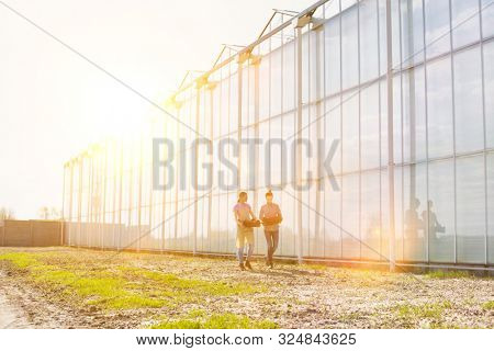 Farmers carrying newly harvest tomatoes in crate at greenhouse with yellow lens flare in background