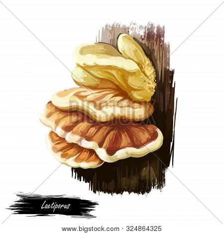 Laetiporus Or Sulphur Shelf, Chicken Fungus Or Mushroom Closeup Digital Art Illustration. Boletus Gr