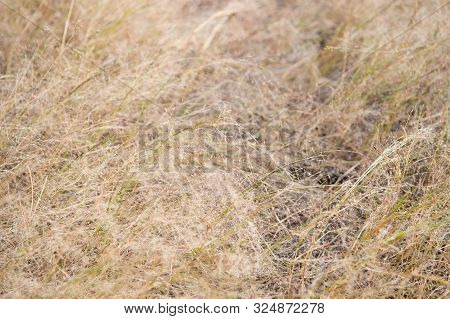 Decay And Sadness. Dead Grass. Brown Grass Background. Dry Plants Or Grass Texture Closeup. Autumn G