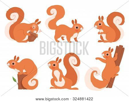 Cute Squirrel. Zoo Little Forest Animals In Action Poses Wildlife Squirrel Vector Cartoon Character.
