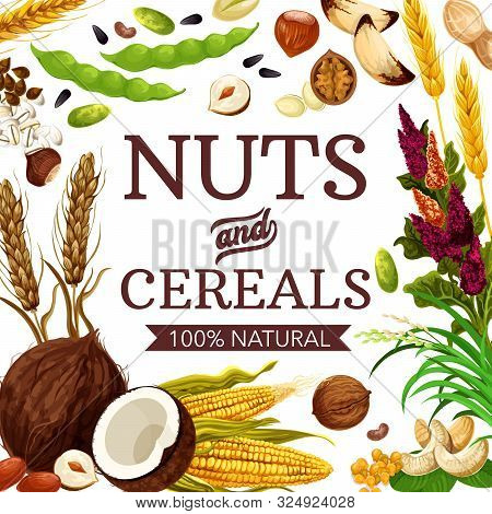 Nuts, Cereals And Grains, Healthy Food Poster. Vector Gmo Free Natural Wheat And Rye, Coconut And Bu