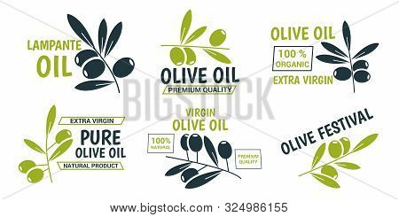 Flat Olive Oil Labels Collection With Green And Black Olive Branches And Different Inscriptions. Iso