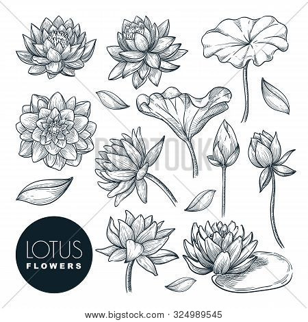 Lotus Beautiful Blooming Flowers And Leaves Set, Isolated On White Background. Vector Hand Drawn Ske
