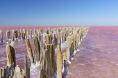 Beautiful view of the textured debris formwork wooden dam on the delightfully bright pink lake Sasyk-Sivash in the West of the Crimean Peninsula, Yevpatoria. Blue sky on a Sunny day poster