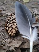 Gray Feather Of Pigeon And Brown Cone poster